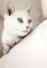 cat rentals link